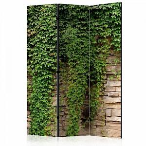 artgeist Paravent Ivy wall [Room Dividers] grün-kombi Gr. 135 x 172