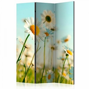 artgeist Paravent Daisies - spring meadow [Room Dividers] mehrfarbig Gr. 135 x 172